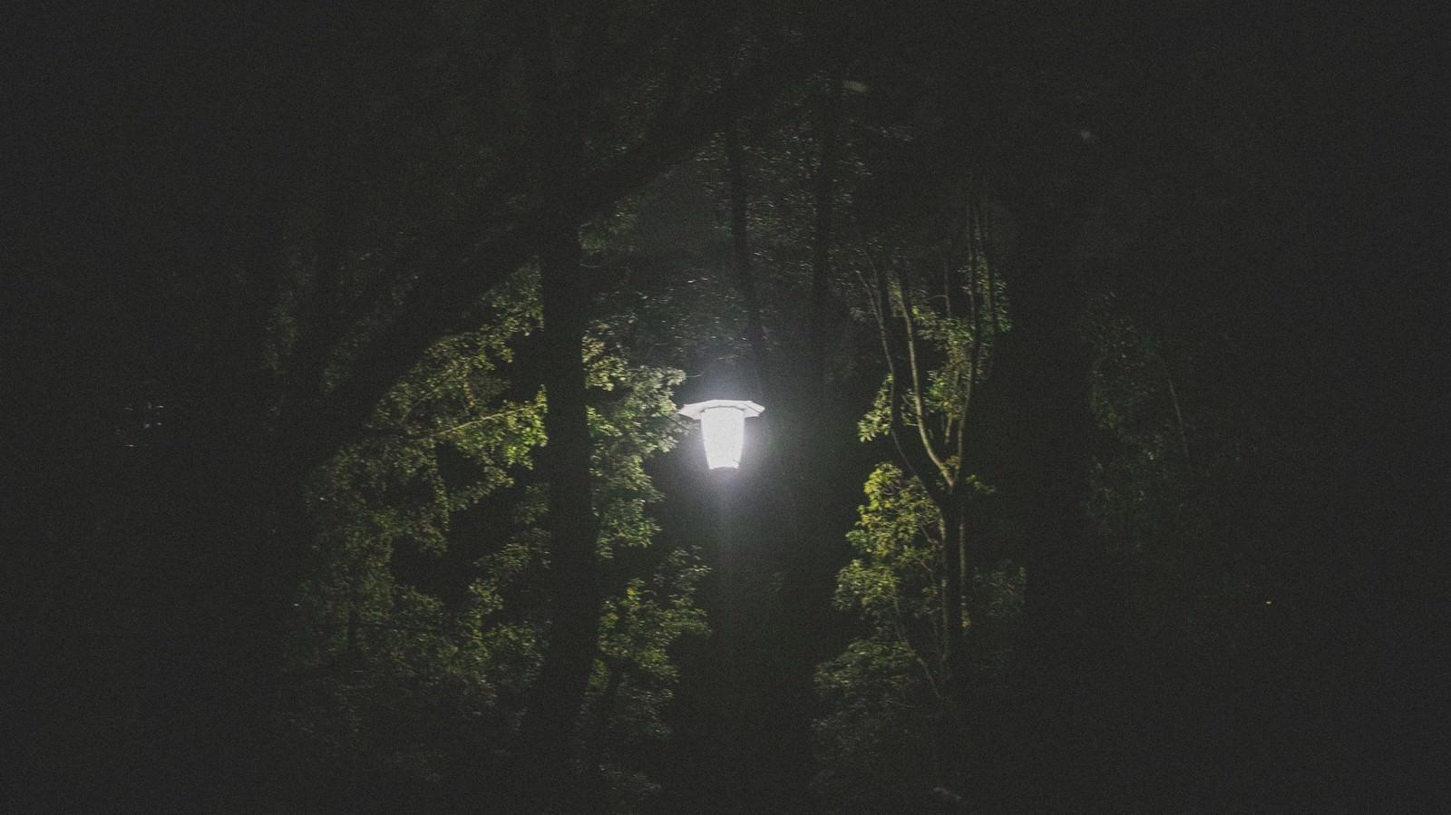 「深夜の公園にある街灯」の写真