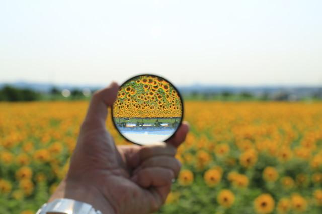フィルターを通して見る向日葵畑の風景の写真