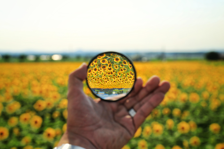 水晶玉越しの不思議なひまわり畑の写真