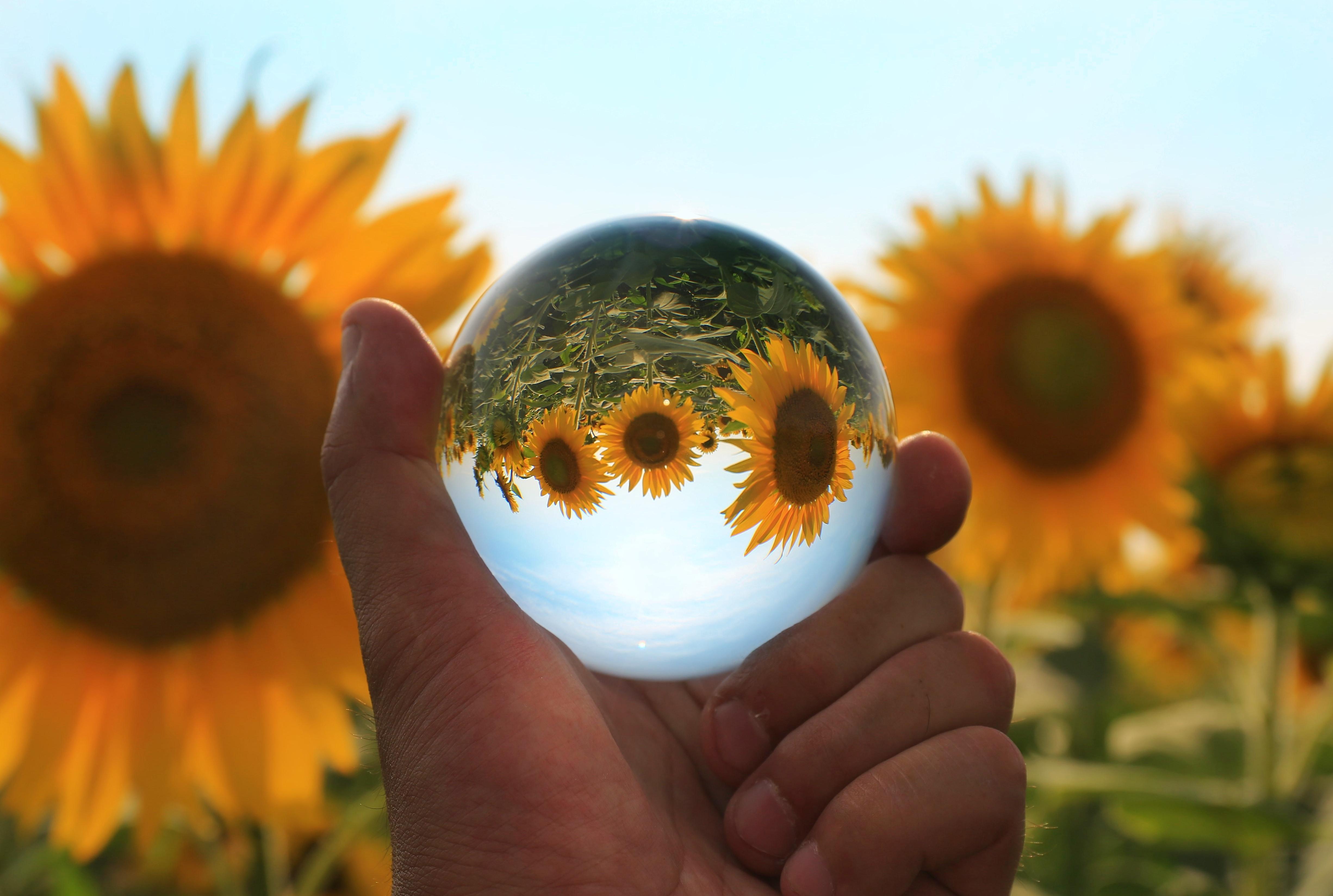 水晶球に詰め込んだ向日葵の思い出の写真