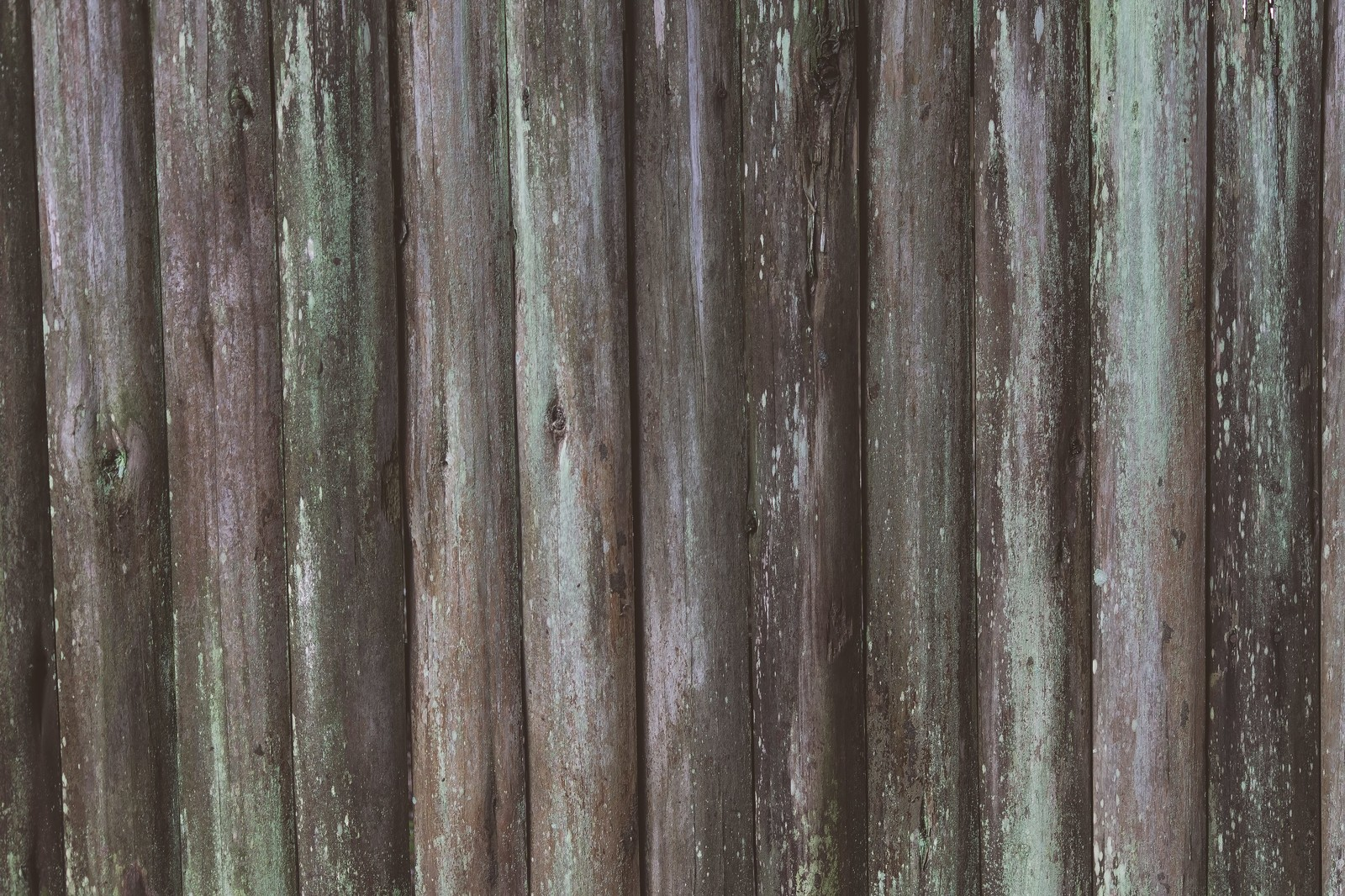 「コケの生えた板(テクスチャー)」の写真