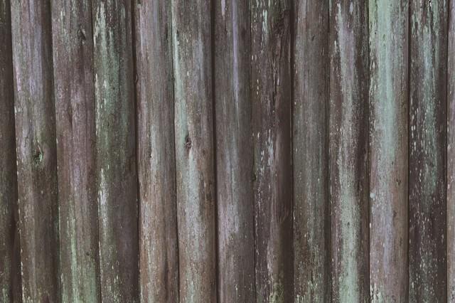 コケの生えた板(テクスチャー)の写真
