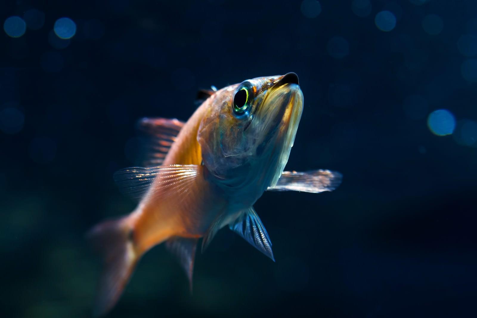 「お魚ブーン」の写真