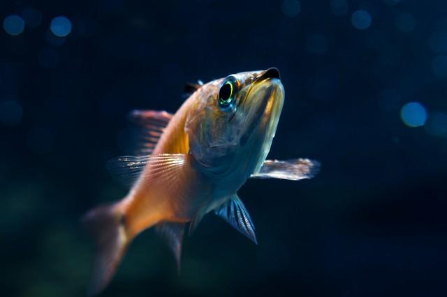 お魚ブーンの写真