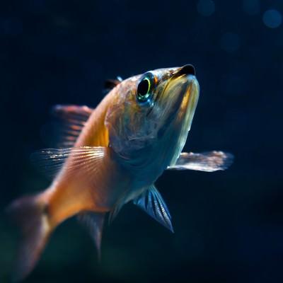 「お魚ブーン」の写真素材