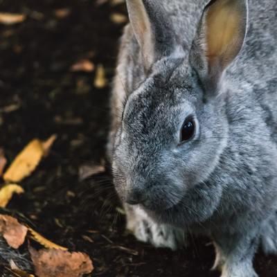 「近寄るウサギ」の写真素材