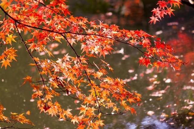 紅葉と水面の写真