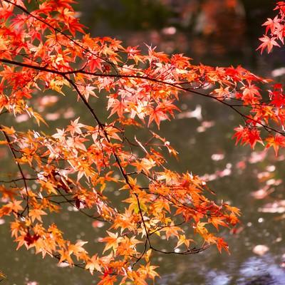 「紅葉と水面」の写真素材