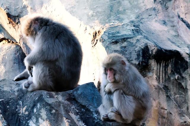 「俺、会社辞めようと思うんだ」と語りそうな猿の写真