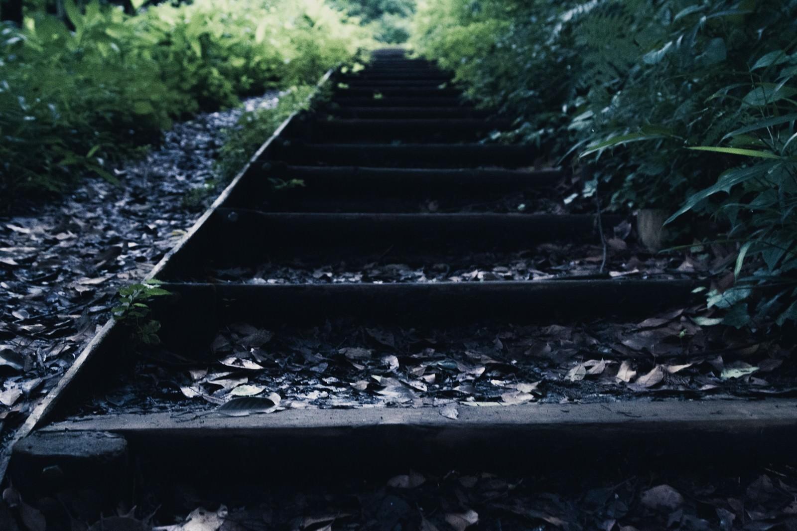 「雨上がり湿った木の階段」の写真