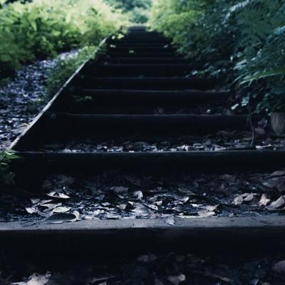 「雨上がり湿った木の階段」の写真素材