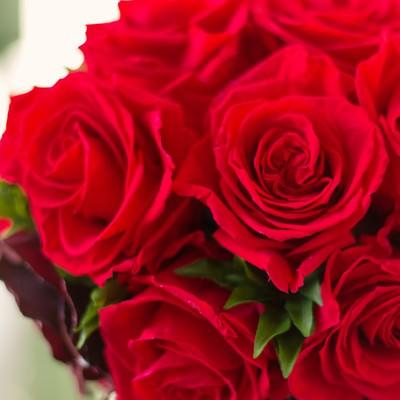 「赤いバラのブーケ(父の日・母の日)」の写真素材
