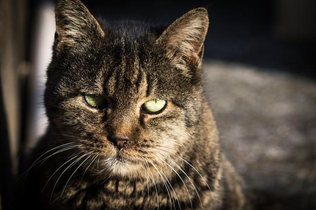 威圧猫の写真
