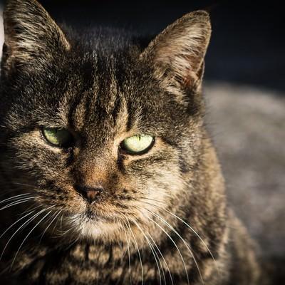 「威圧猫」の写真素材