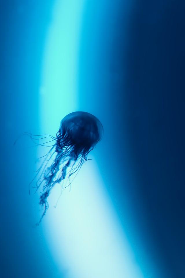 光のリングとミズクラゲの写真