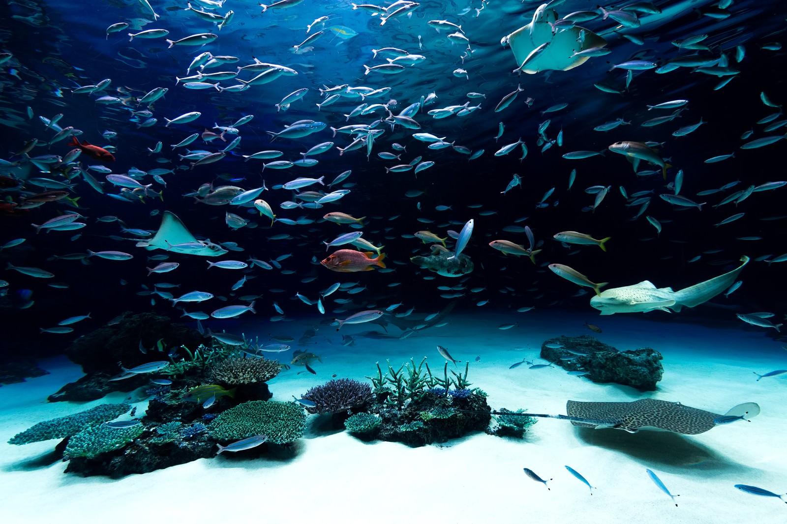 「水族館水族館」のフリー写真素材を拡大