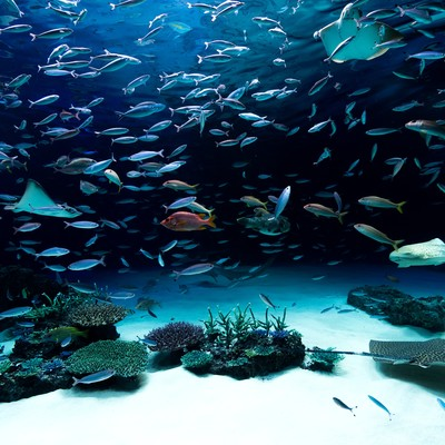 「水族館」の写真素材