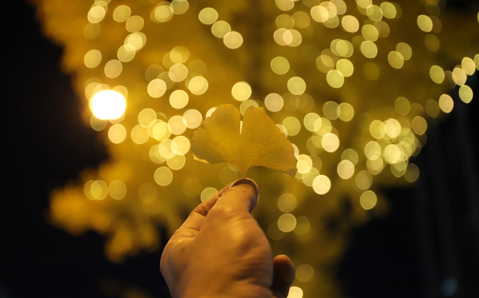 「握りしめたイチョウの葉とイルミネーション」の写真