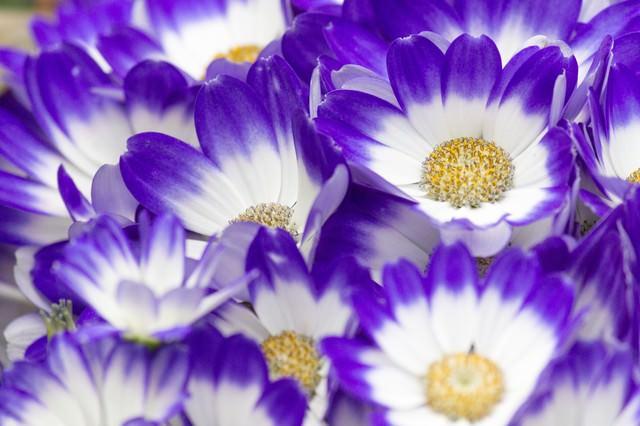 咲き始めた花の写真