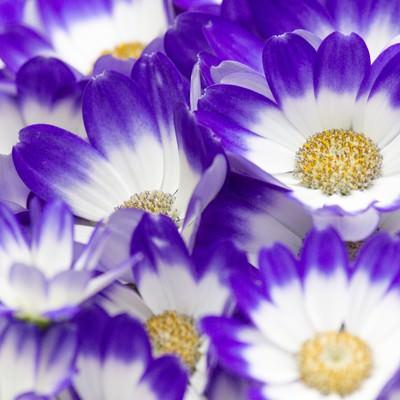 「咲き始めた花」の写真素材