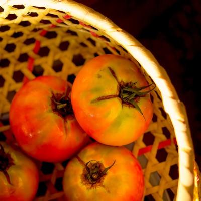 「ザルとトマト」の写真素材