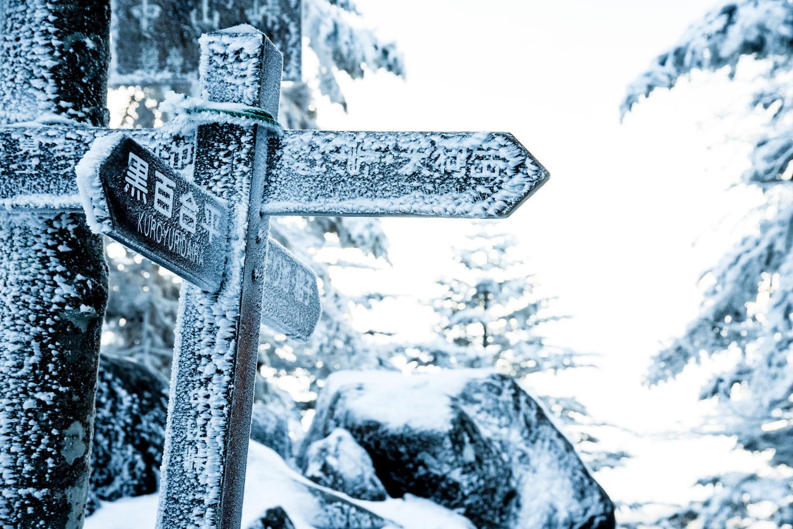 「吹雪いた雪で凍り付いた標識」の写真