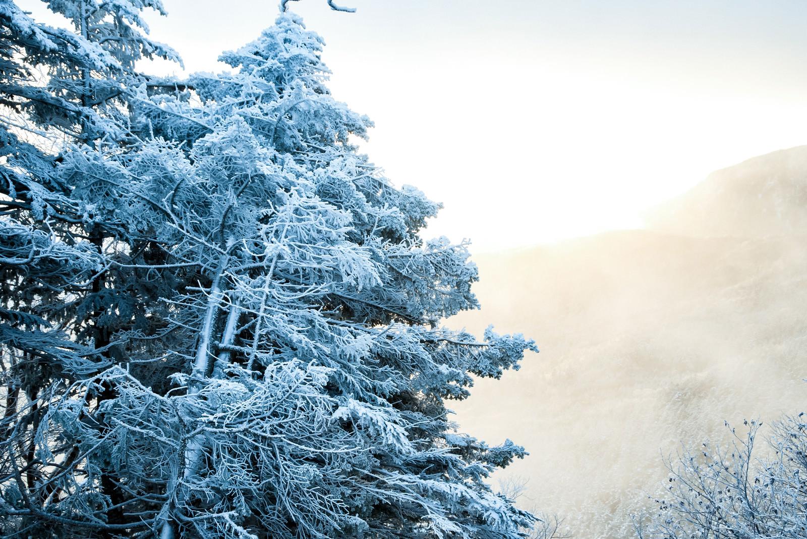 「光り輝く朝日と樹氷」の写真
