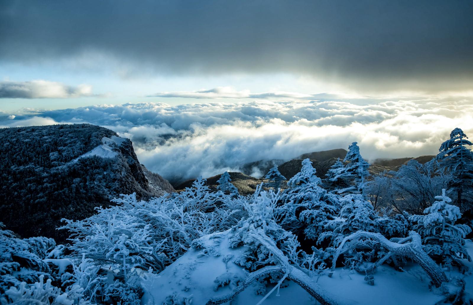 「樹氷越しに拝む稲子岳と雲海」の写真