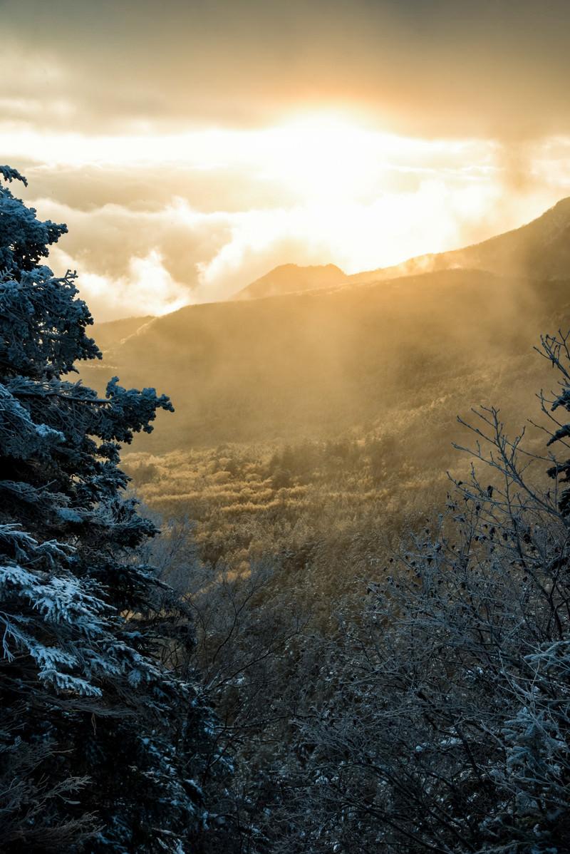 「厳冬期の白銀の森と差し込む朝日」の写真
