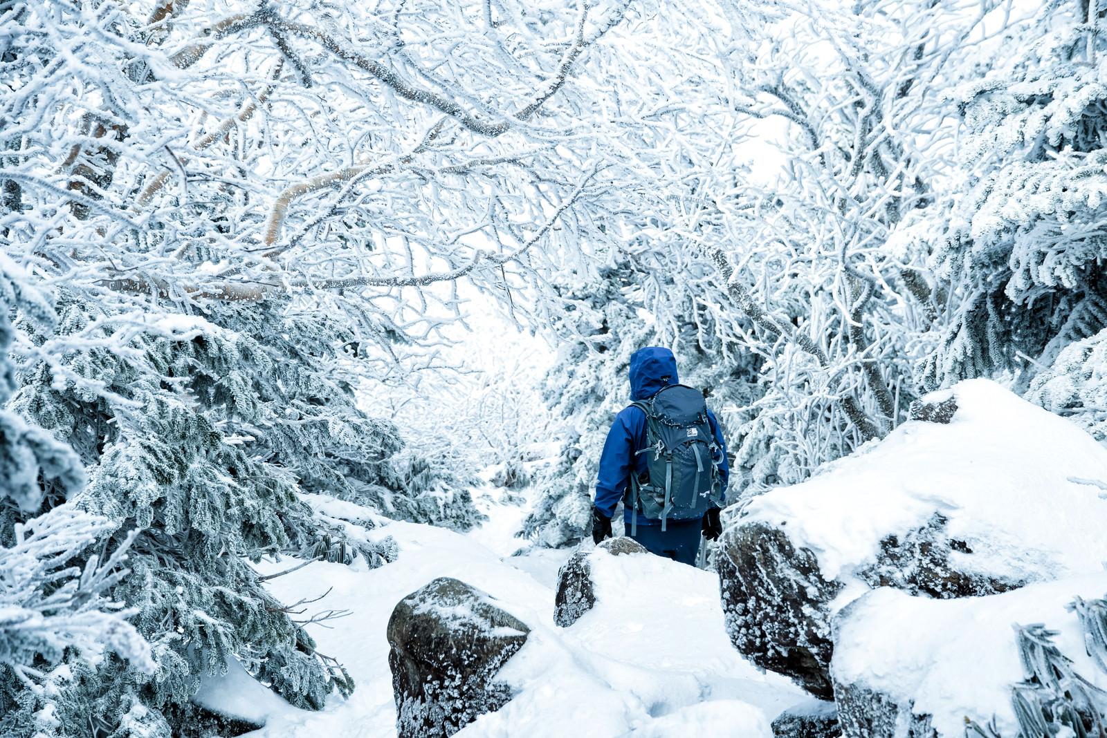 「樹氷の中を進む登山者」の写真