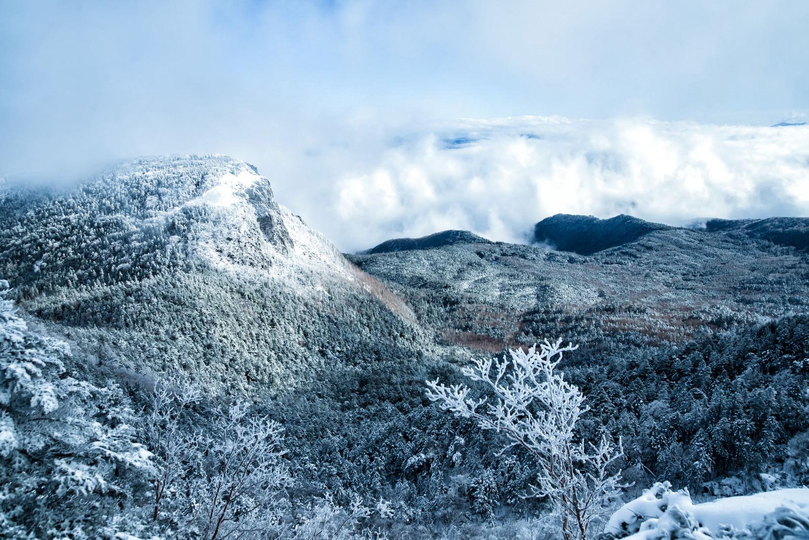 「稲子岳の岩壁と北八ヶ岳の森(長野県)」の写真