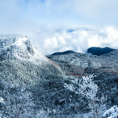 稲子岳の岩壁と北八ヶ岳の森(長野県)の写真