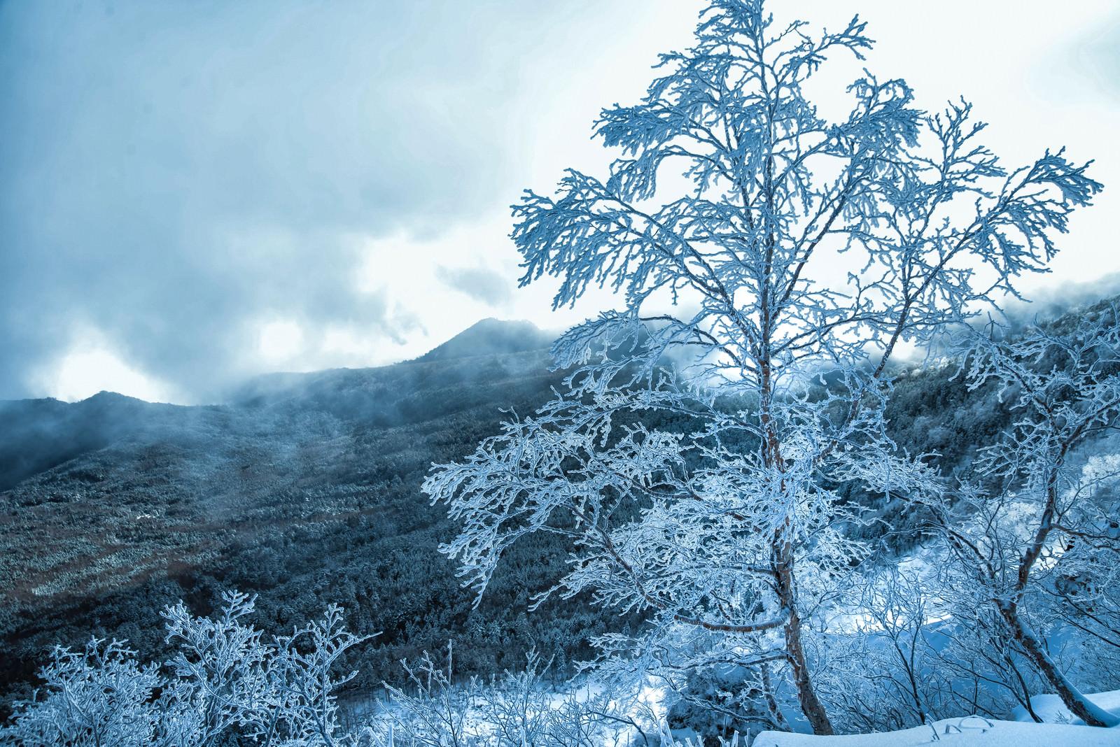 「美しい樹氷と北八ヶ岳の森」の写真