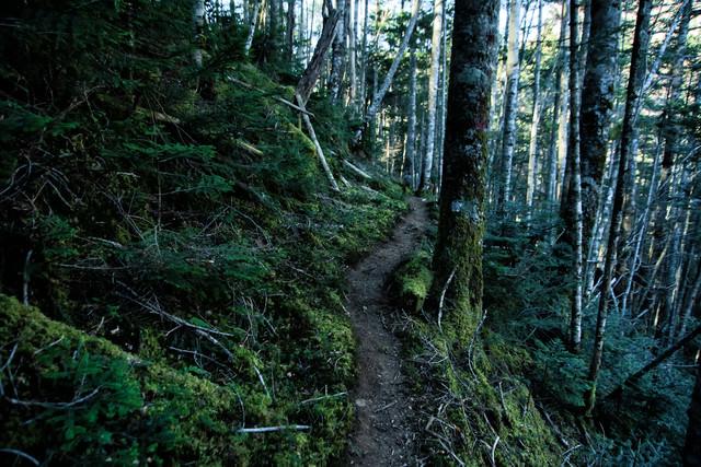 苔生す八ヶ岳の登山道の写真