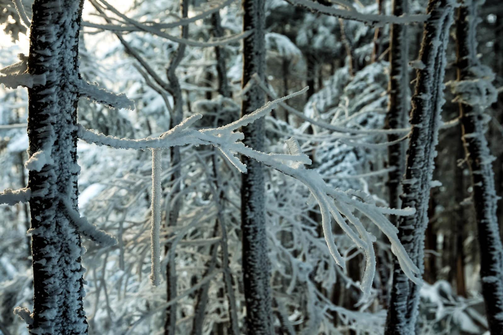 「長く伸びる樹氷の枝」の写真