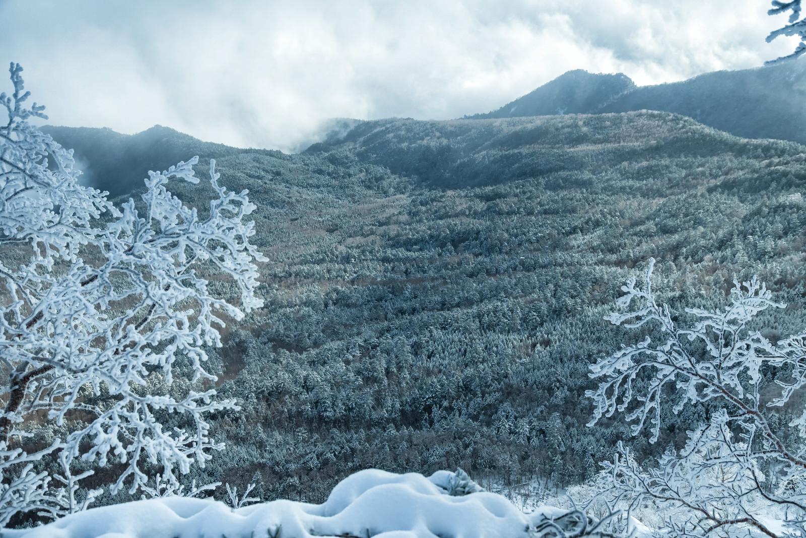 「雪化粧した森と樹氷」の写真