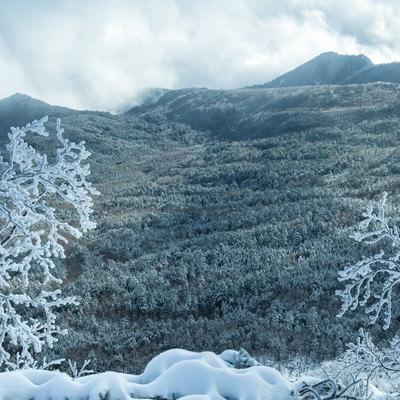 雪化粧した森と樹氷の写真