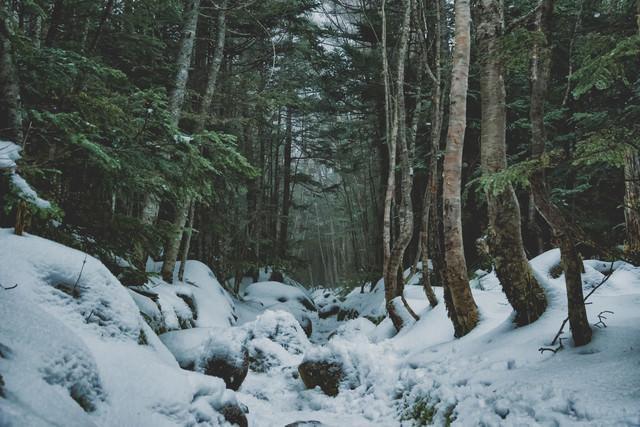 北八ヶ岳へと口を開ける積雪の登山道の写真