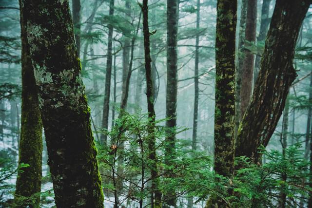 霧に包まれる初冬の北八ヶ岳の写真