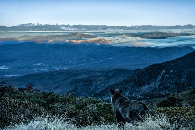 霞む空と山岳を望む野生のカモシカの写真