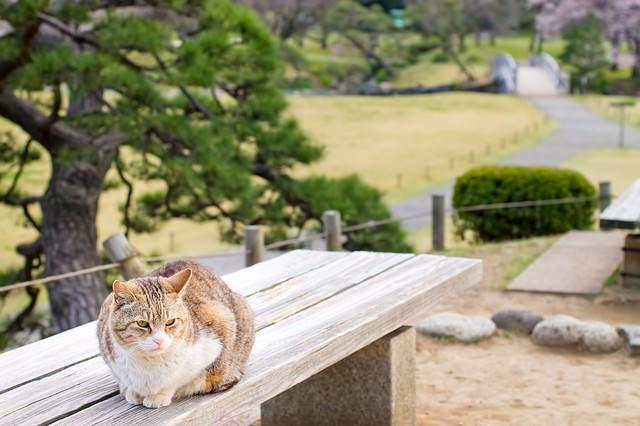 ベンチの上で丸くなる猫の写真