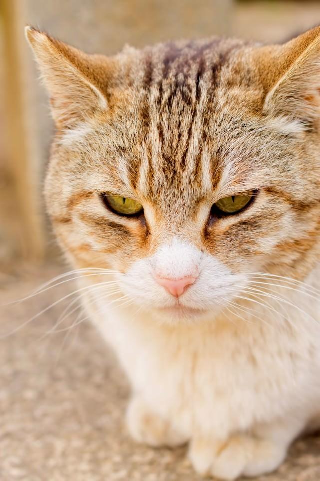 じっとして時を待つ猫の写真