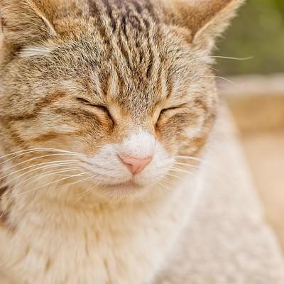 「ポカポカ陽気で寝ている猫」の写真素材