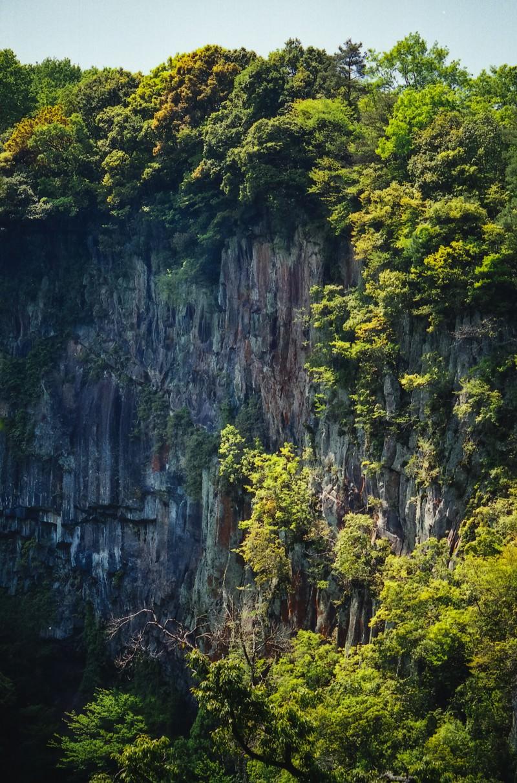 「切り立った断崖と木」の写真