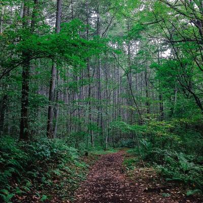 森の中へと続く道の写真