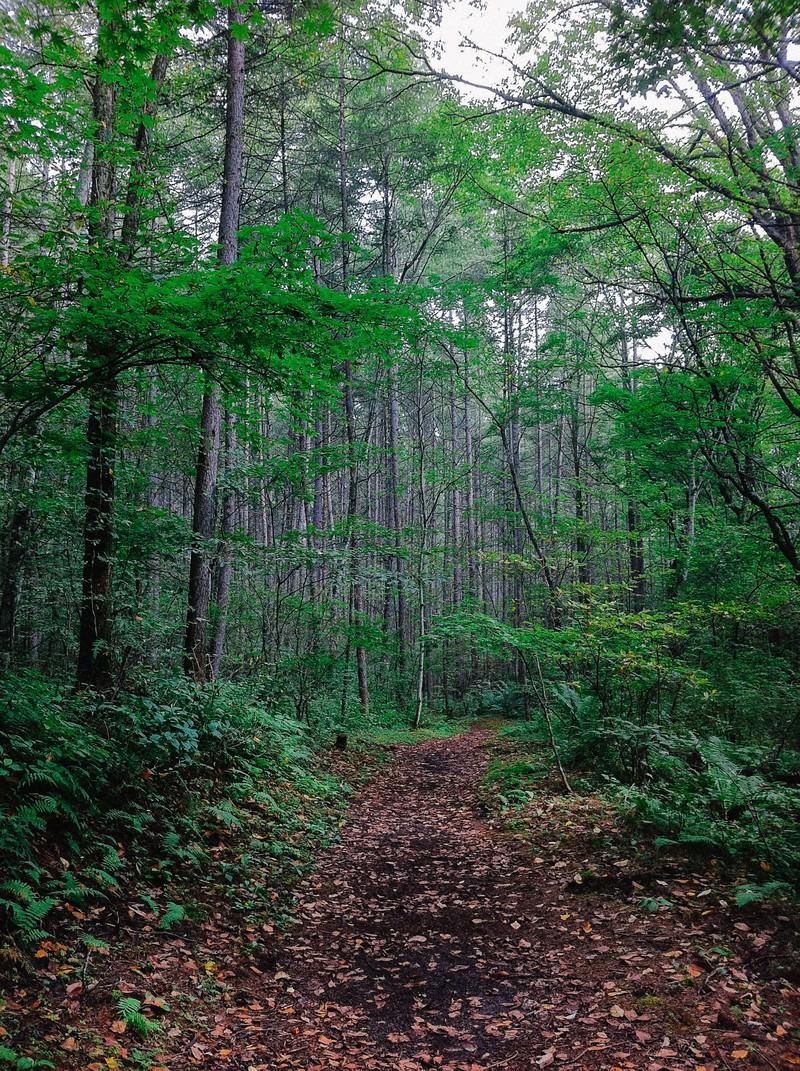 「森の中へと続く道   写真の無料素材・フリー素材 - ぱくたそ」の写真