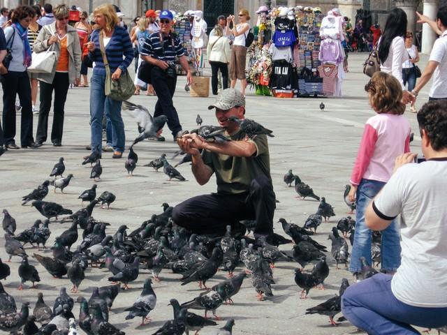 サン マルコ広場で鳩に餌を与える人と観光客(イタリア)の写真
