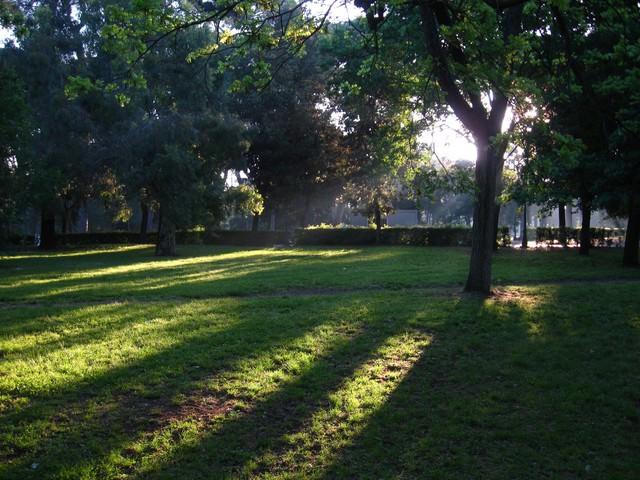 ボルゲーゼ公園に伸びる木々の影(ローマ)の写真