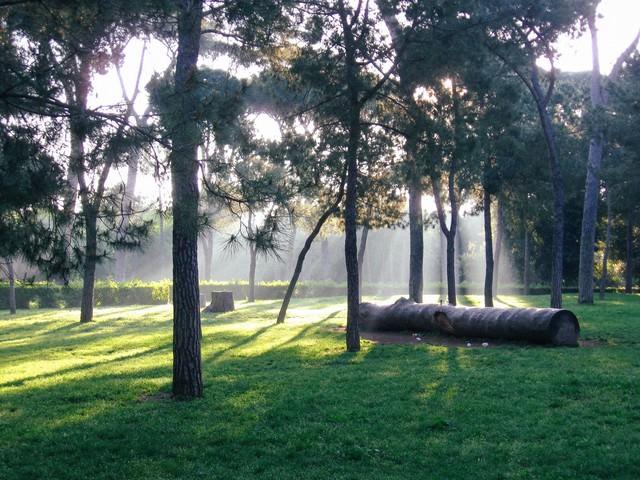 ボルゲーゼ公園に横たわる大木(ローマ)の写真
