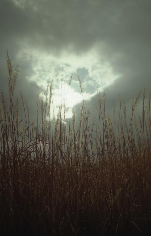 曇り空から覗く空とススキの写真